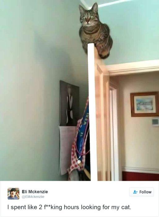 gato arriba de una puerta