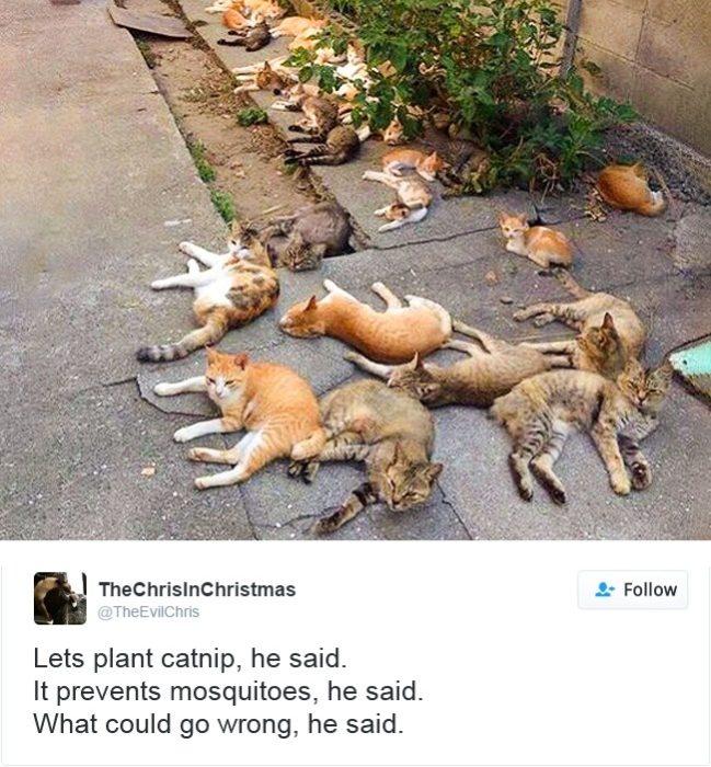 gatos durmiendo en el suelo