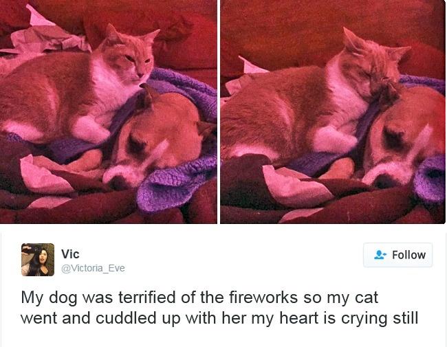 perro cobarde y gato cuidándolo
