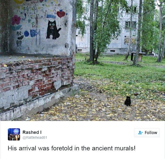 llegada gato pasto dibujo