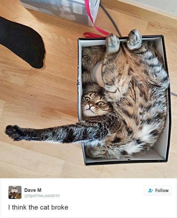 gato en una caja torcido
