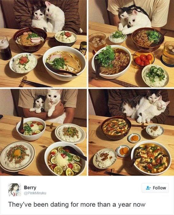 gatos comiendo sushi