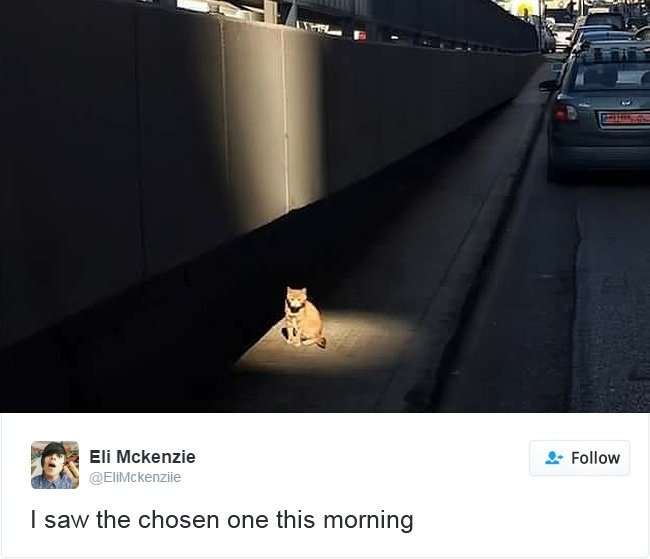 gato elegido luz calle
