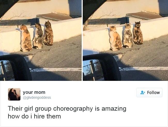 coreografía gatas bailando