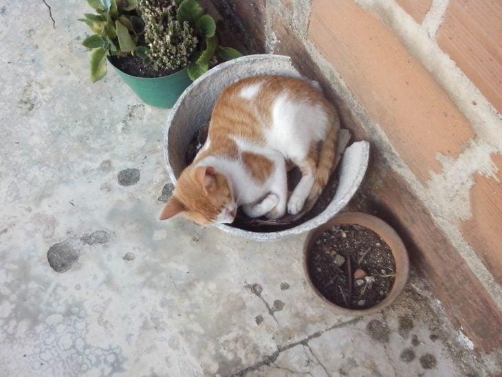 gato en la maceta