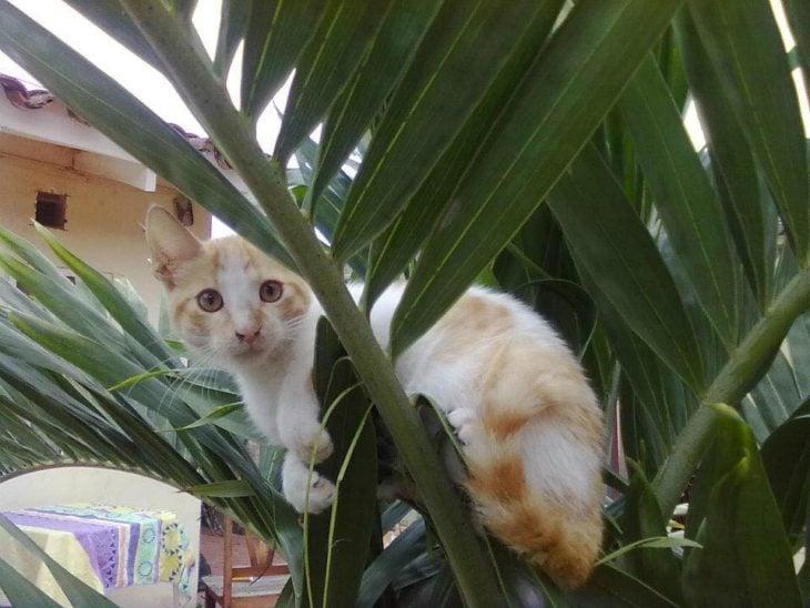 gato arriba de una planta