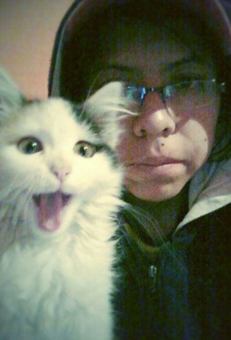 gato sacando la lengua