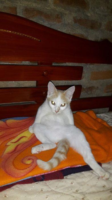 gato sentado extrañamente