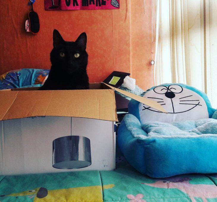 gato en su caja