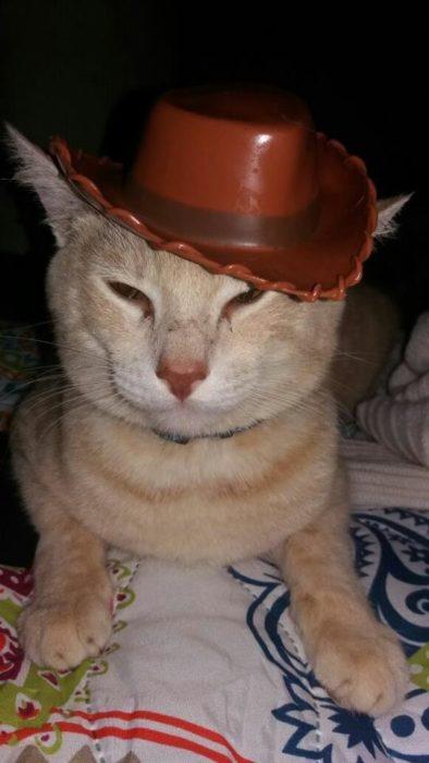 gato con sombrero