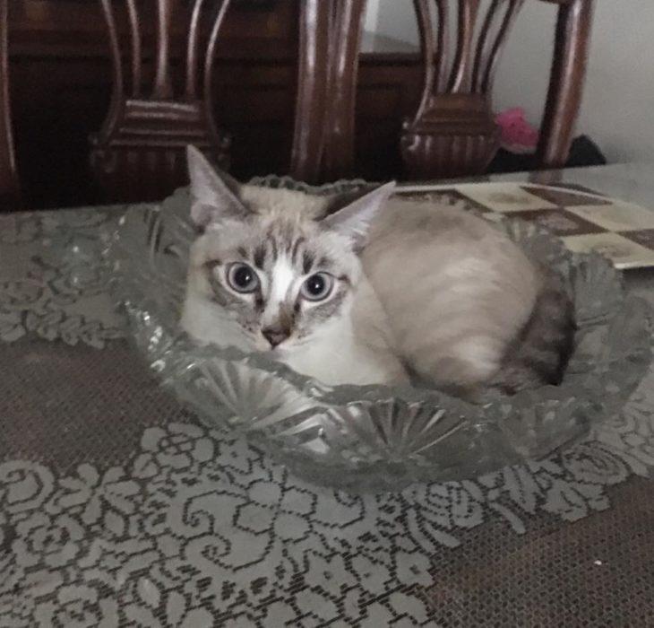 gato en el florero