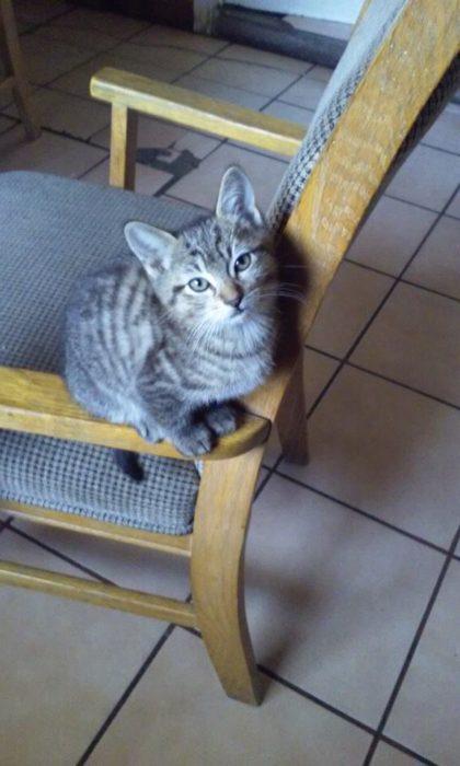 gato en la silla