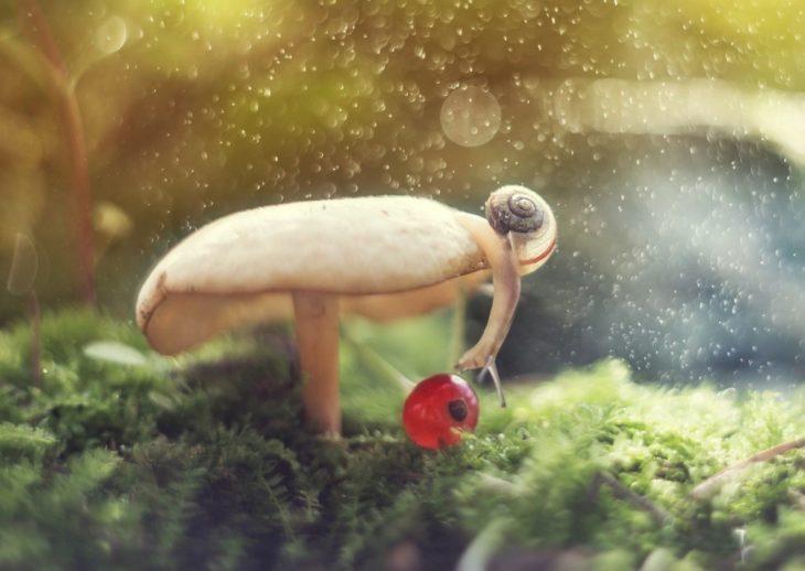 caracol descubriendo la naturaleza