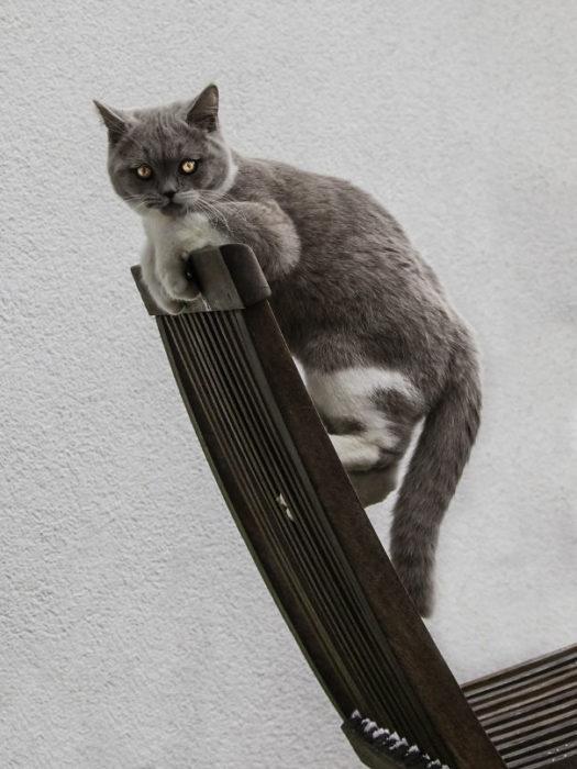 gato a punto de atacar