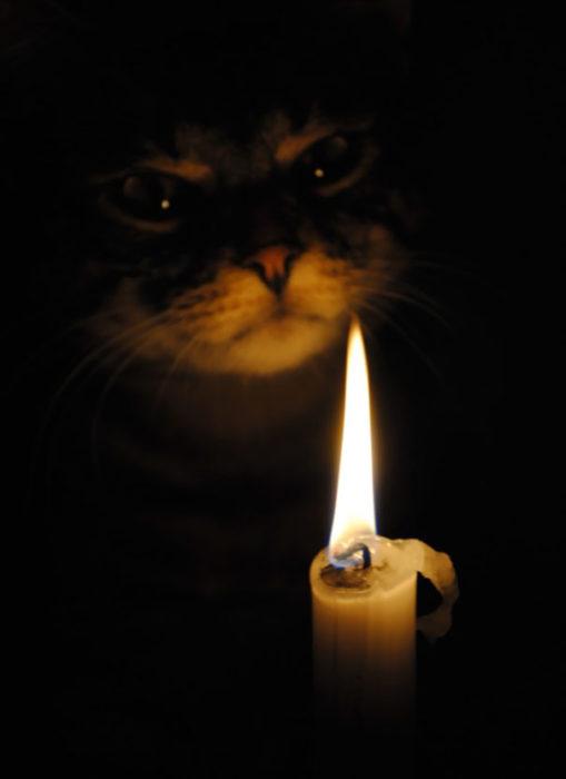 gato ritual vela