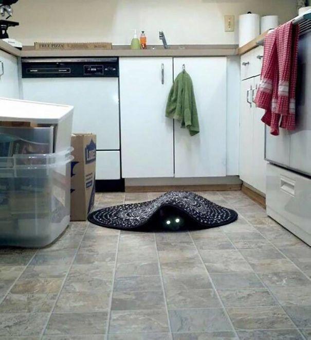 gato escondido en el tapete cocina