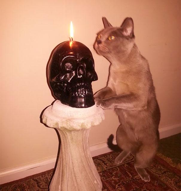 gato rezando a la muerte