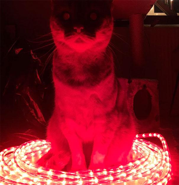 gato rojo endemoniado