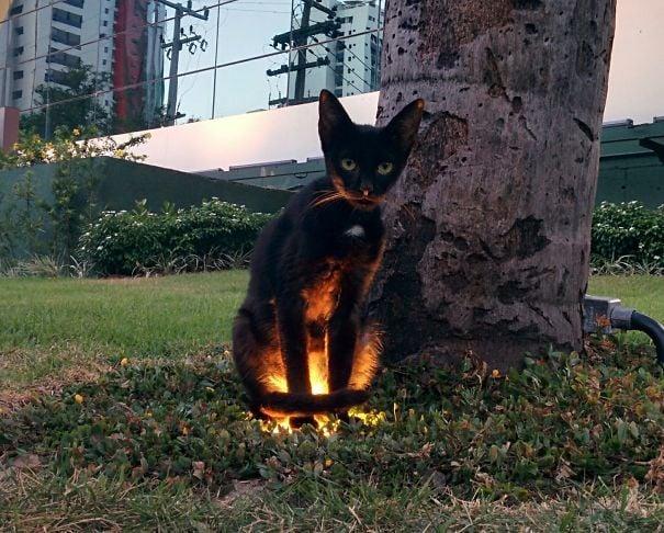 gato malvado en el pasto