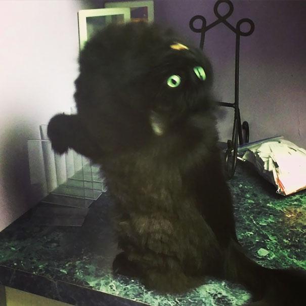 gato con el diablo adentro