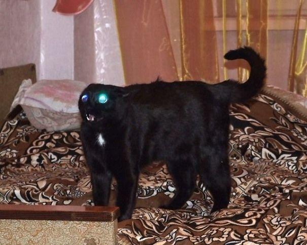 gato negro poseído