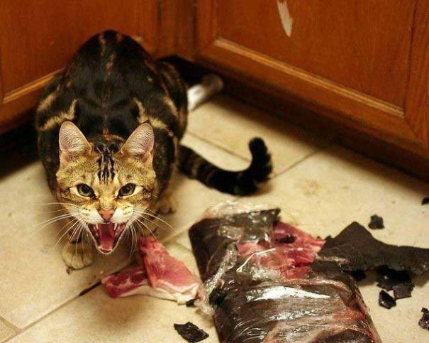 gato endemoniado