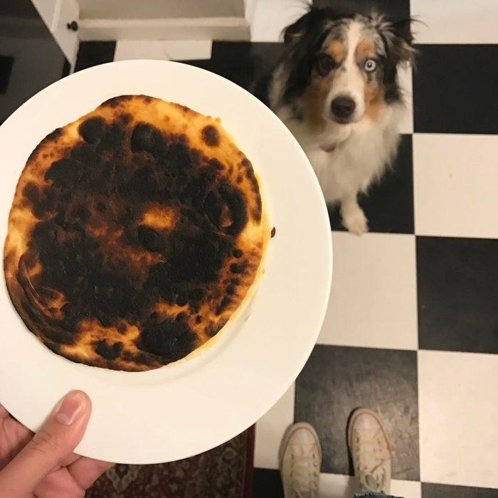 perro mirando un pancake quemado