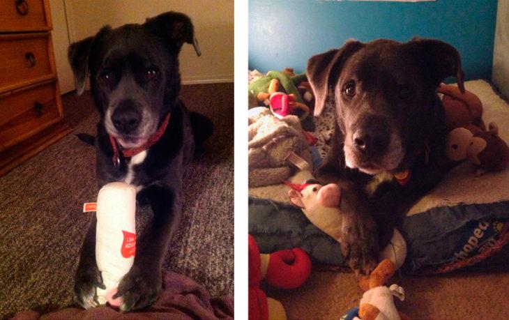 perro con su juguete antes y ahora