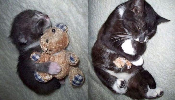 gatito dormido con su peluche
