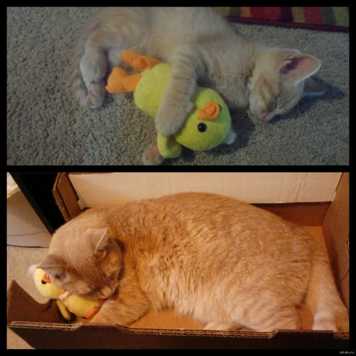 gato con su patito a través de los años