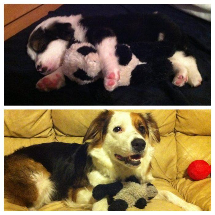 perro con su juguete a través d elos años