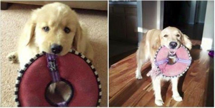 cachorro con su peluche y ahora
