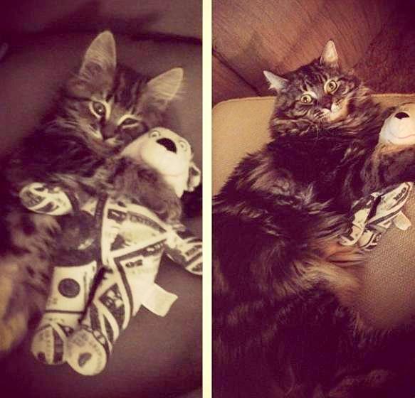 gato bebe y ya crecido con el mismo juguete