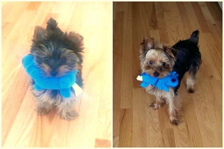perro antes y después, el mismo juguete