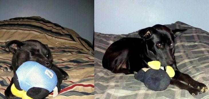perro de cachorro con el mismo juguete