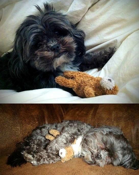 perrito con su peluche favorito