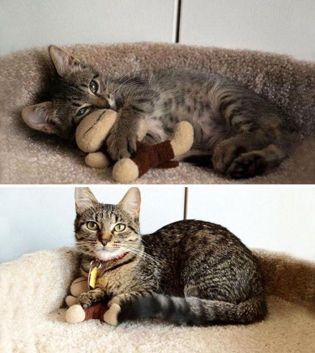 gato abrazando a su juguete favorito