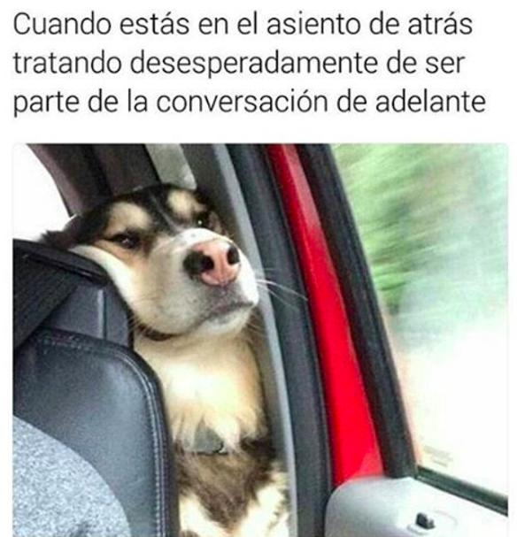 Memes perros - asiento trasero