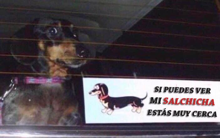 Memes perros - si puedes ver mi salchicha