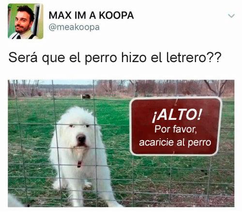 Memes perros - acaricie al perro