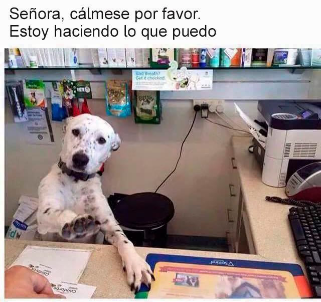 Memes perros - señora cálmese
