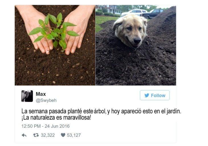 Memes perros - la naturaleza maravillosa