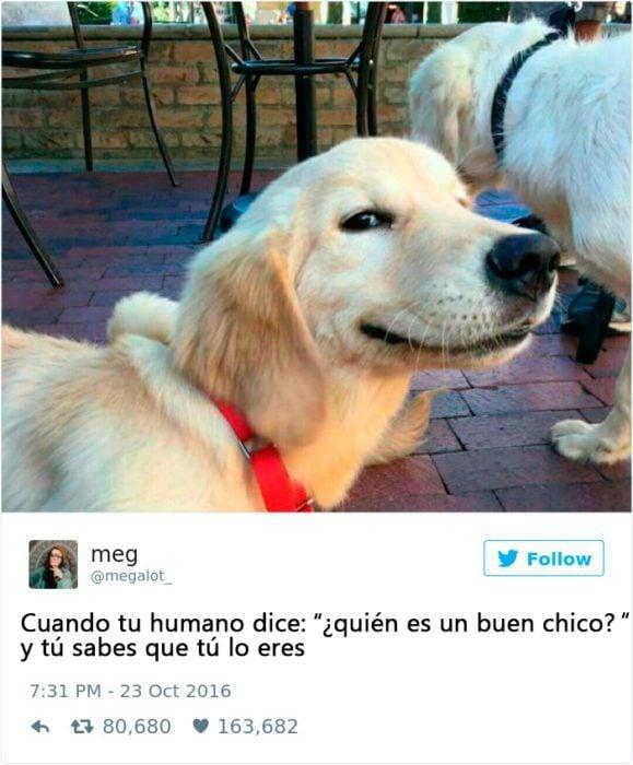 Memes perros - quien es un buen perro ?