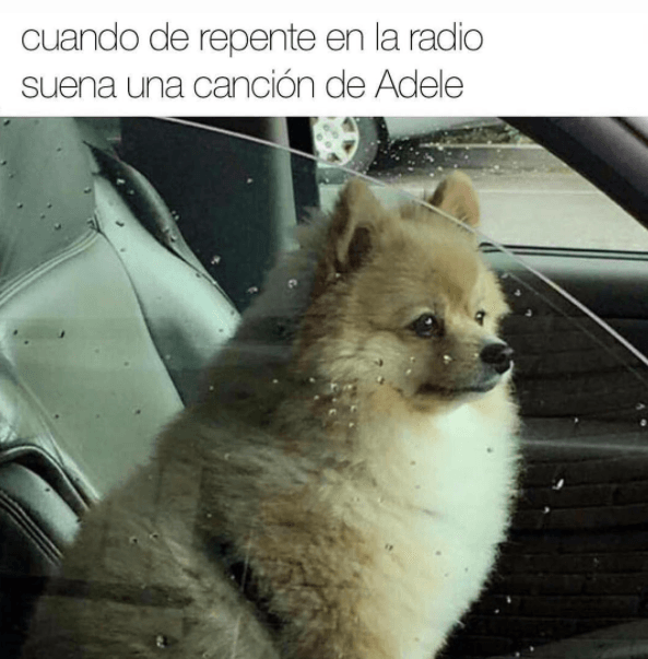 Memes perros - adele