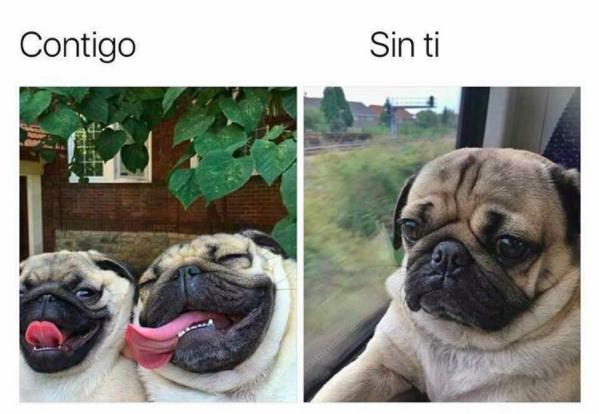 Memes perros - contigo sin ti
