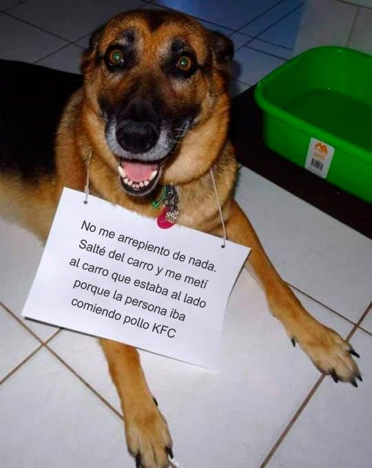 Memes perros - no me arrepiento