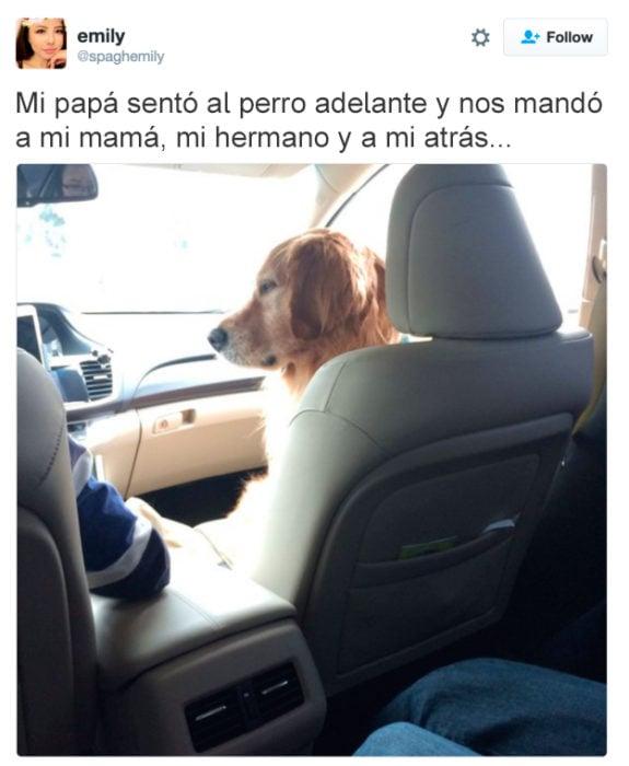 tuit perro en el asiento de adelante del carro