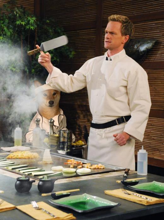 programa televisión cocina shiba inu perrito