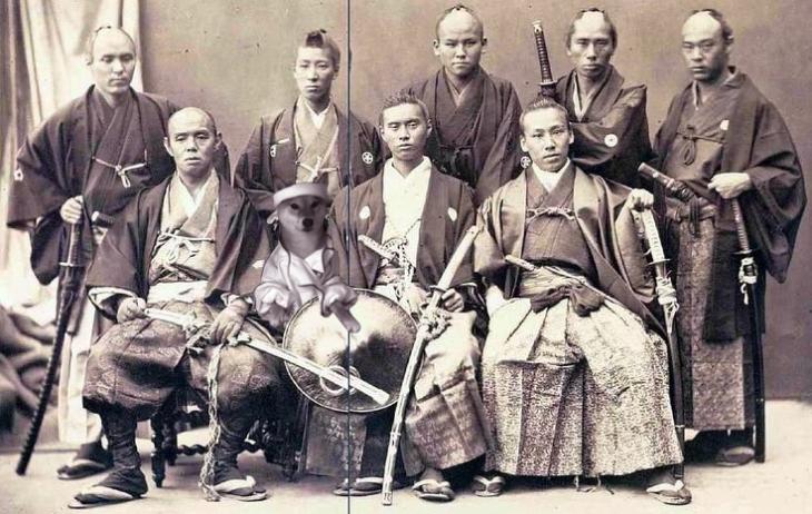 shiba inu perrito samurais