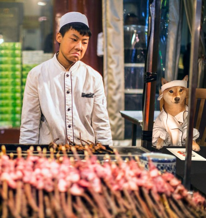 shiba inu perrito chefs